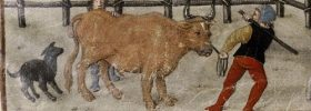 Cattle Plague in Ireland: An Early Medieval Game-Changer